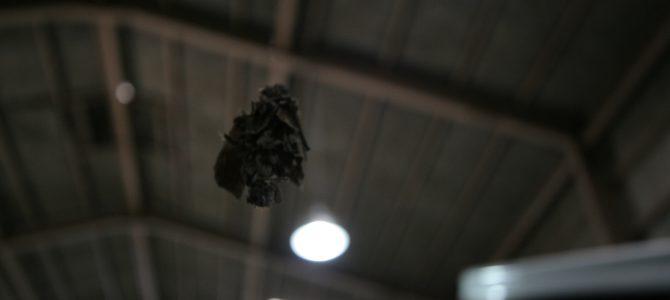 工場天井から・・・
